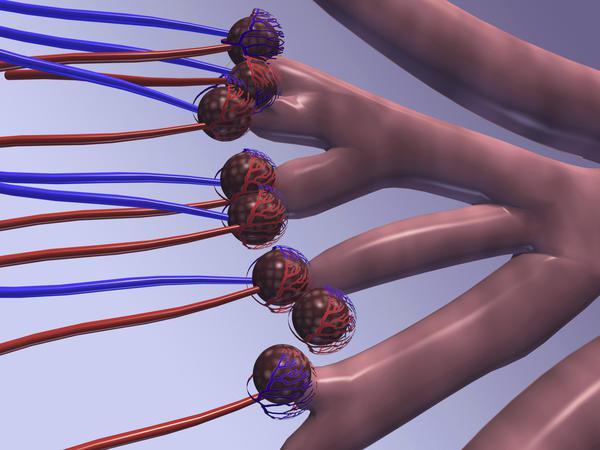 vrat hipertenzija područje
