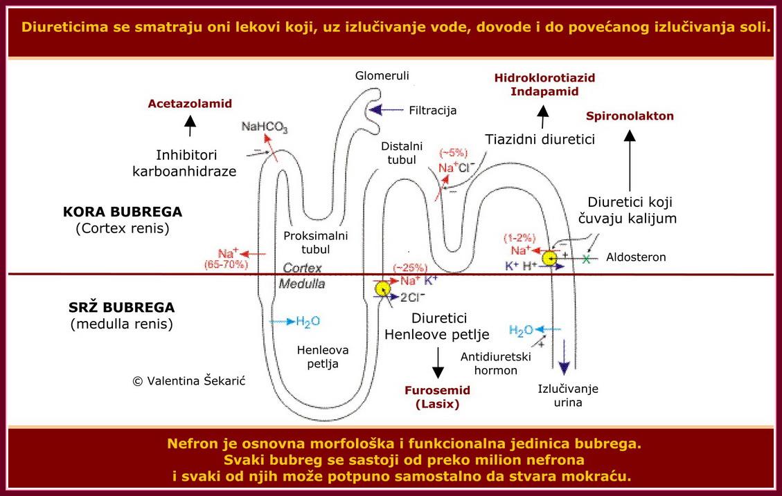 hipertenzije i vazodilatatori hipertenzija vazokonstrikciju