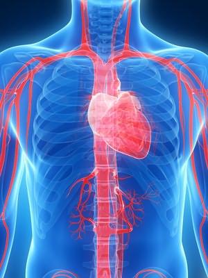 hipertenzija je bolest civilizacije otkucaja srca i krvni tlak