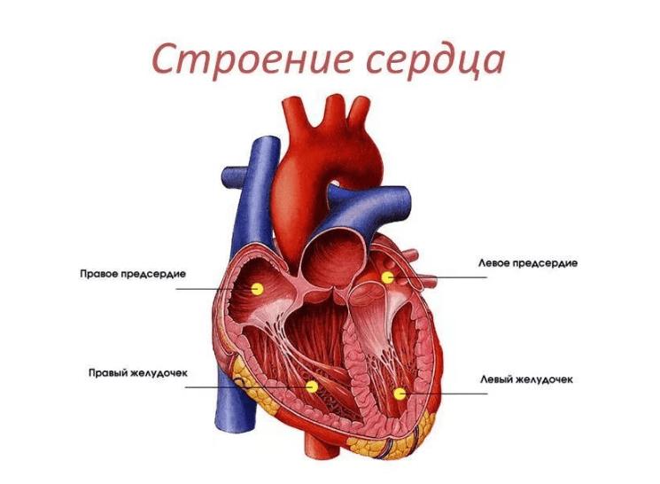 hipertenzija, srce i kako ga liječiti mučnina i povraćanje, hipertenzija