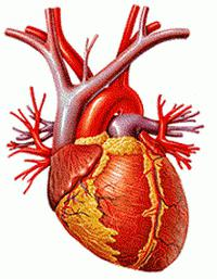 hipertenzija stupanj 2 2 rizik