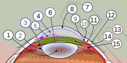 hipertenzije i bolesti oka