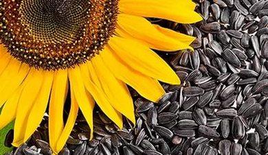 sjemenke suncokreta hipertenzija