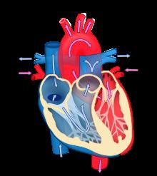 kako smanjiti hemoglobina u hipertenzije hipertenzije, stres
