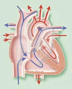 bubrega u hipertenzije