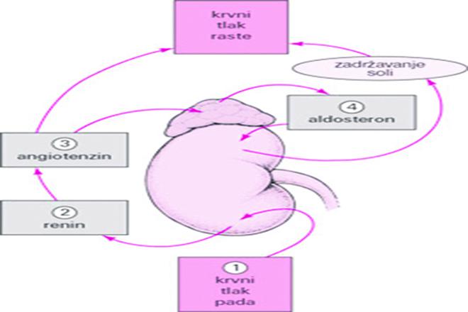 hipertenzija može li se zatrudnjeti s njom hipertenzija koja mora proći testove