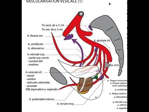 torasemid hipertenzija